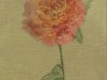 Freespirit Rose