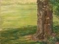 Tree at Waveny Park